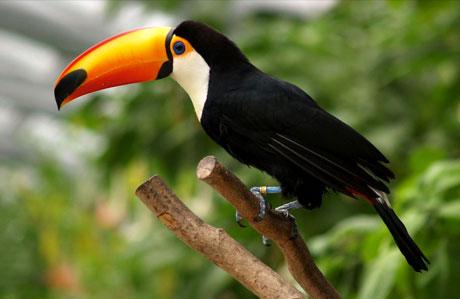 اطلس تصویری پرندگان