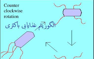 دانلود پاورپوینت الگوریتم بهینه سازی غذایابی باکتری  BFO