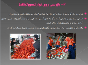 تولید تجاری  رب گوجه فرنگی