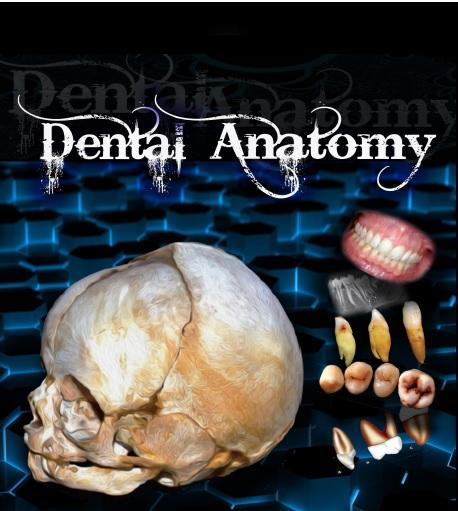 DENTAL ANATOMY .PDF