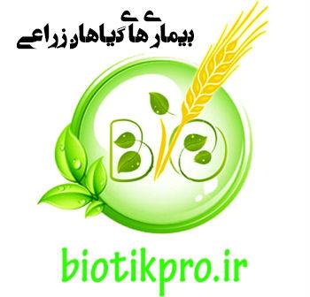 مجموعه کامل پاورپوینت بیماری های گیاهان زراعی