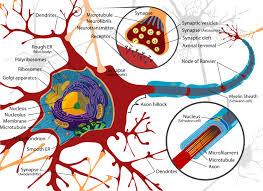 شبکه هاي عصبی در مطلب