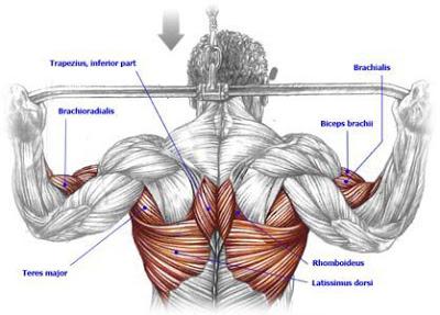 علوم انساني : تربيت بدني و علوم ورزشي/ .شامل آموزش دانلود  مقاله  فايل وكتاب  دوميداني سالمندان شیوه ی تمرین با وزنه ژیمناستیک  اصلاحی گودی کمر  کاراته  دانلود فیلم های آموزشی ایروبیک  بدنسازی  کشتی