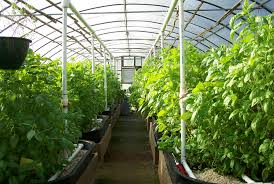 طرح توجیهی گلخانه کامل با تمامی جزئیات و برآورد قیمت ها سال 1394(فایلword)