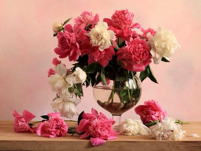 دانلود مقاله گل های شاخه بریده و عوامل موثر در طول عمر آنها