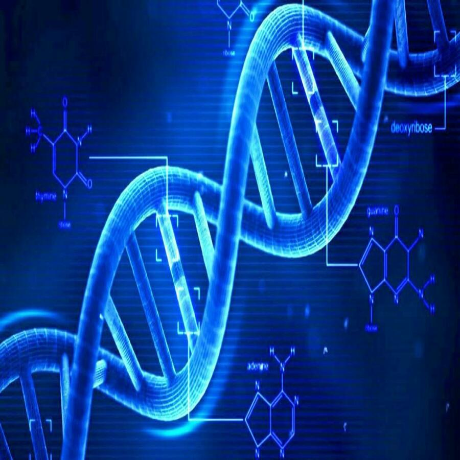 دانلود پاورپوینت پلی مرفیسم یا چند شکلی DNA