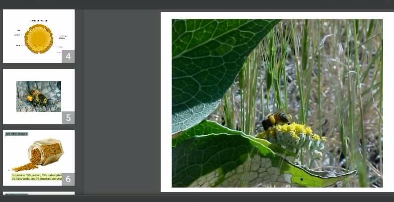 دانلود پاورپوینت نقش گرده گل در بهداشت انسان و زنبوران عسل