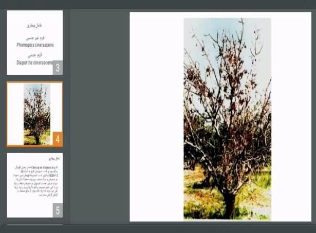 دانلود پاورپوینت خشکیدگی درختان انجیر