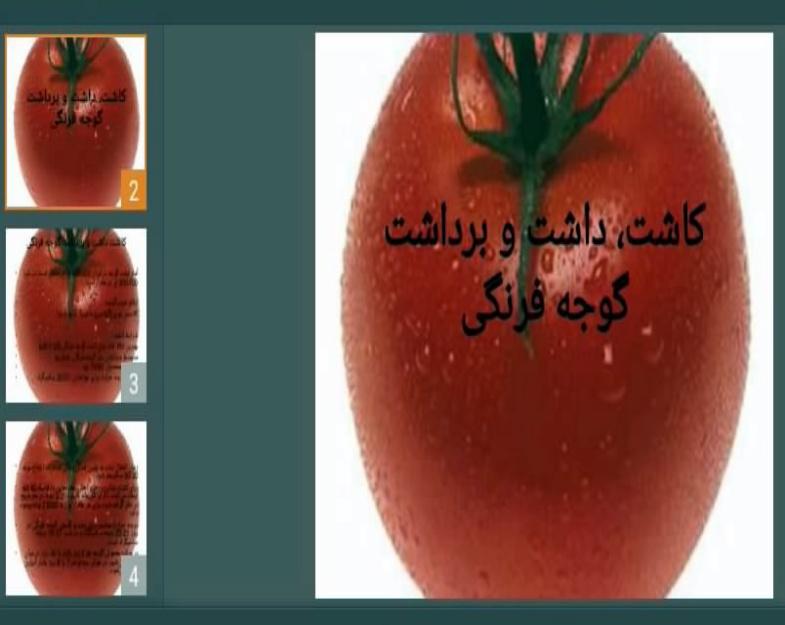 دانلود پاورپوینت کاشت، داشت و برداشت گوجه فرنگی