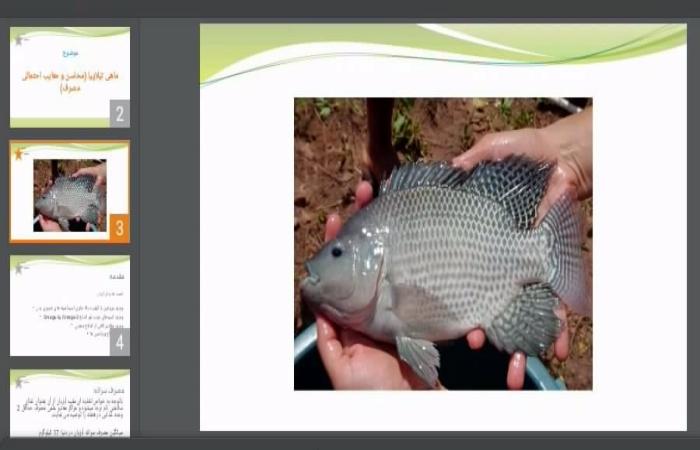 دانلود پاورپوینت ماهی تیلاپیا (محاسن و معایب احتمالی مصرف)