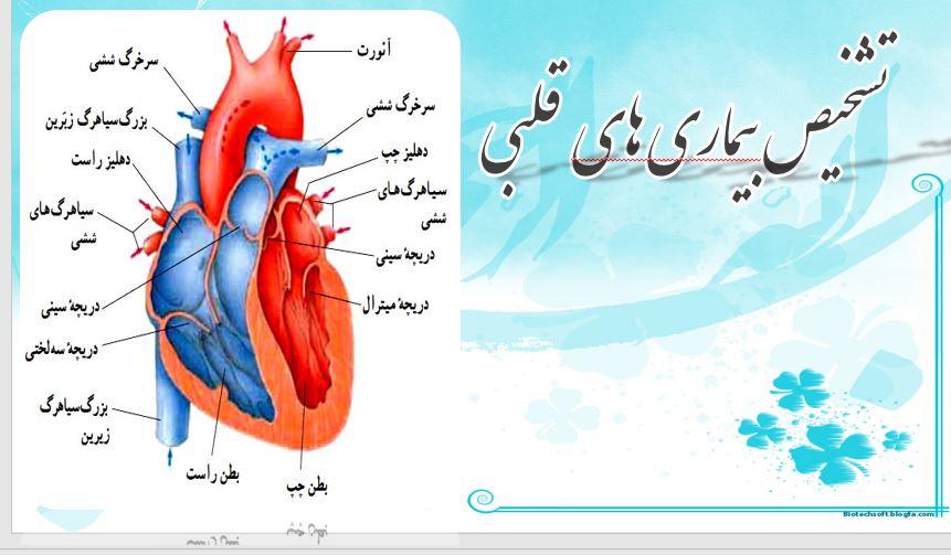 پاور پوینت داده کاوی در تشخیص بیماریهای قلبی (19