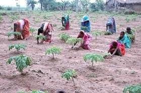 دانلود پاورپوینت عملکرد گروههای خودیار در کشور هند