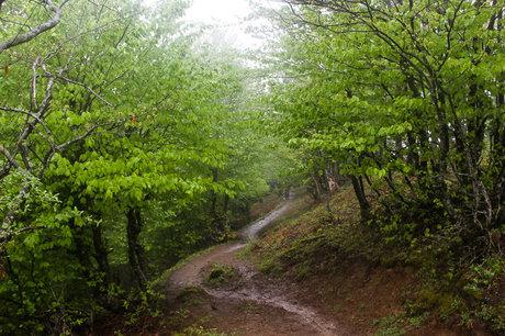 دانلود پاورپوینت جغرافیای جنگلهای ایران
