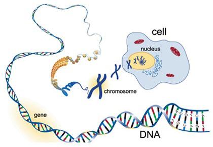 جزوه آموزشی و تمرینی فصل 5 زیست شناسی سال سوم( ماده ژنتیک)