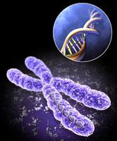 جزوه آموزشی و تمرینی فصل 6  زیست شناسی سال سوم( کروموزوم ها و میتوز)