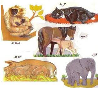 جزوه آموزشی و تمرینی فصل 11 زیست شناسی سوم( تولید مثل جانوران)
