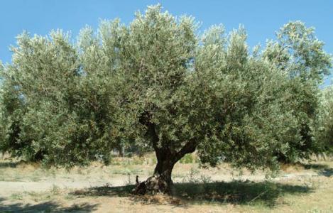 جزوه کامل و کاربردی و روان درس درخت شناسی