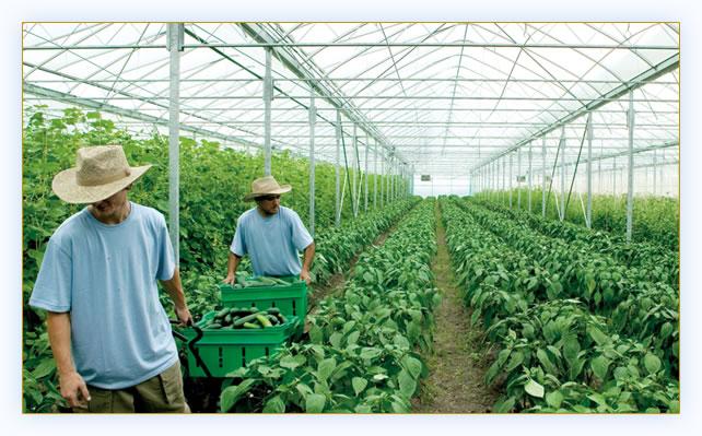 پاورپونت باغبانی و کشاورزی