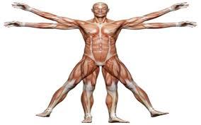 پروژۀ حرکت شناسی انسان