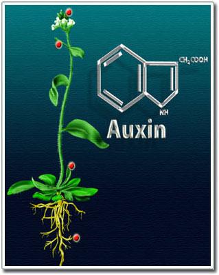 هورمون ها و تنظیم کننده های رشد گیاهی