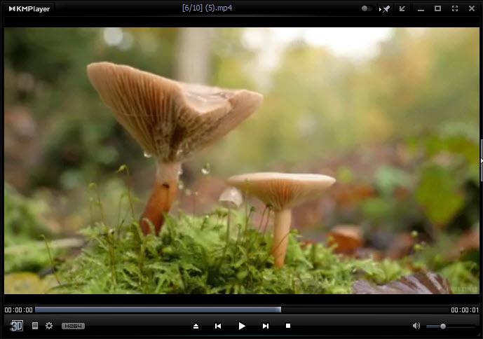 مجموعه کاملی از ویدئوهای لوپ آرامبخش در طبیعت