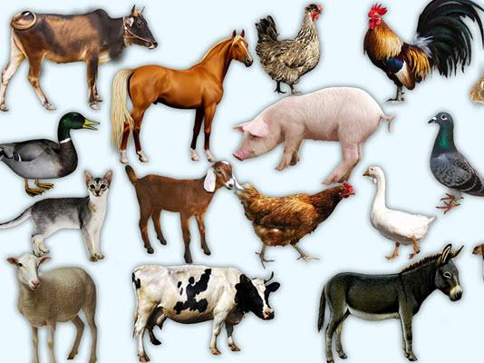 حیوانات اهلی