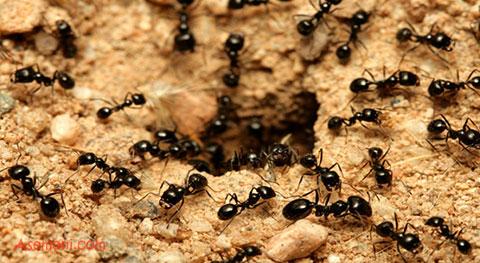 زندگی مورچه ها