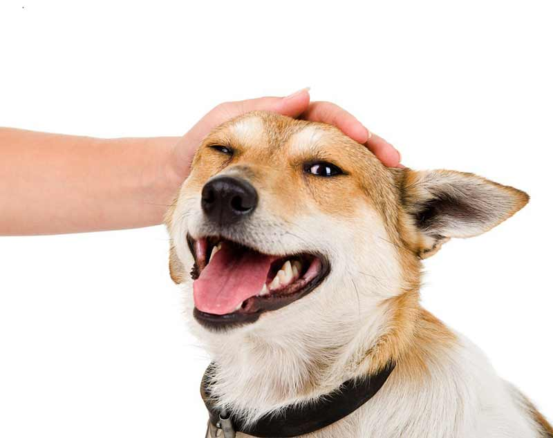 نژاد سگ ها