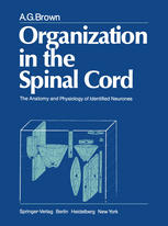 Organization in the Spinal Cord: The Anatomy and Physiology of Identified Neurones