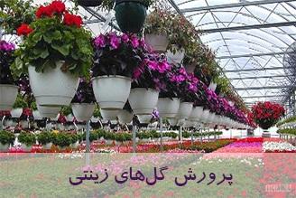 طرح پرورش گل های زینتی