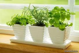 نرم افزار اندروید گیاهان آپارتمانی وشرایط نگهداری آنها
