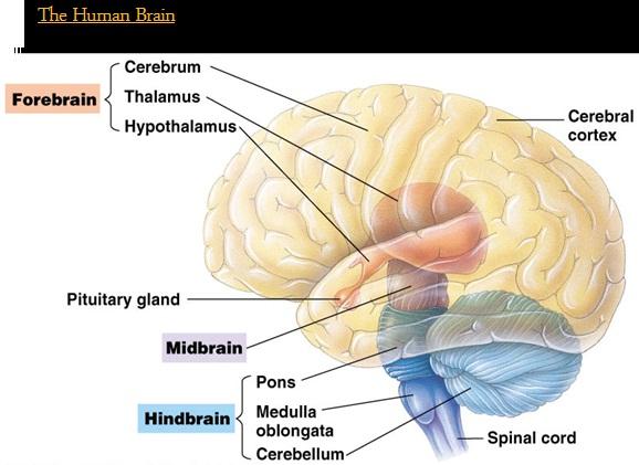 اصطلاحات رایج پرستاری مغز و اعصاب