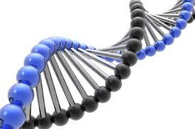 DNA Fingerprinting3