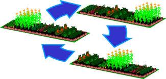 پاورپوینت/ عوامل مؤثر بر انتخاب تناوب زراعی