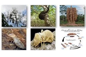 معرفی لانه موریانه و ساختار موریانه