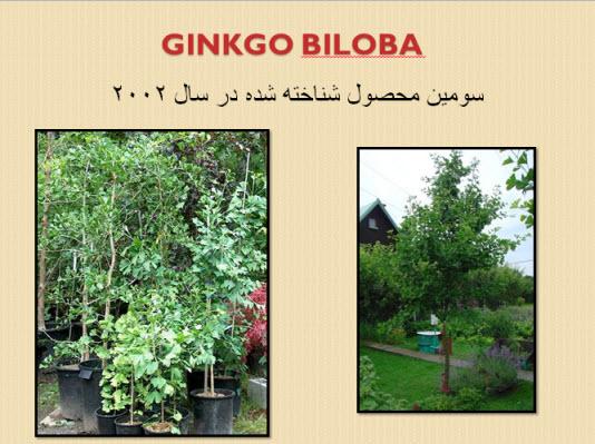 پاورپوینت گیاه جینکو بیلوبا Ginkgo Biloba
