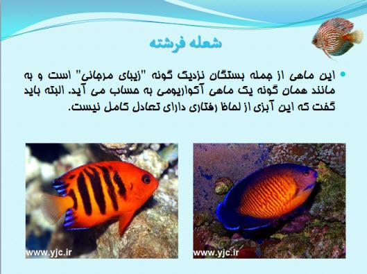 پاورپوینت موجودات عجیب اعماق اقیانوس