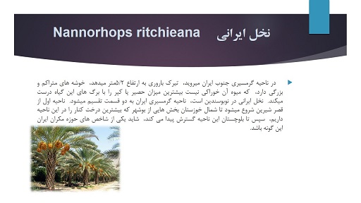 پاورپوینت گیاهان گرمسیری ایران