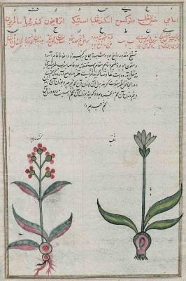 تشريح الاشجار فارسي