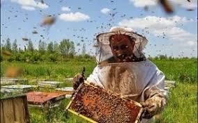 دانلود نمونه سوالات پرورش دهنده زنبور عسل اسکن برگه  اسفند 96