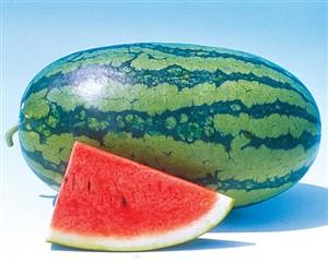 کاشت داشت و برداشت هندوانه