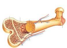دانلود رایگان پاورپوینت پوکی-استخوان