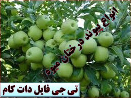 پیوند زدن درختان میوه را به صورت عملی یاد بگیرید + فیلم آموزشی