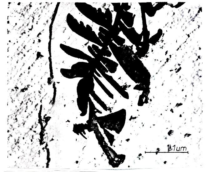 پروژه آماده: بررسی دو نوع خوردگی، خوردگی بین دانه ای و خوردگی توام با تنش در فولادهای زنگ نزن آستنیتی - 119 صفحه فایل ورد Word