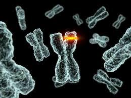 کتاب آموزش الگوریتم ژنتیک در متلب