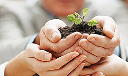 مدیریت خاک در برابر بیماری