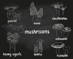 اهمیت و چرایی مطالعه قارچ ها