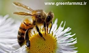 زنبور داری به زبان ساده