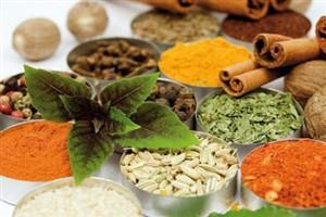 مطالعات امکان سنجی مقدماتی طرح تولید عصاره گیري از گیاهان داروئی