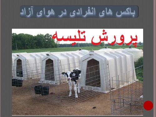 دانلود سمینار پرورش تلیسه (breeding heifers ) درگاوشیری  ( پاورپوینت)